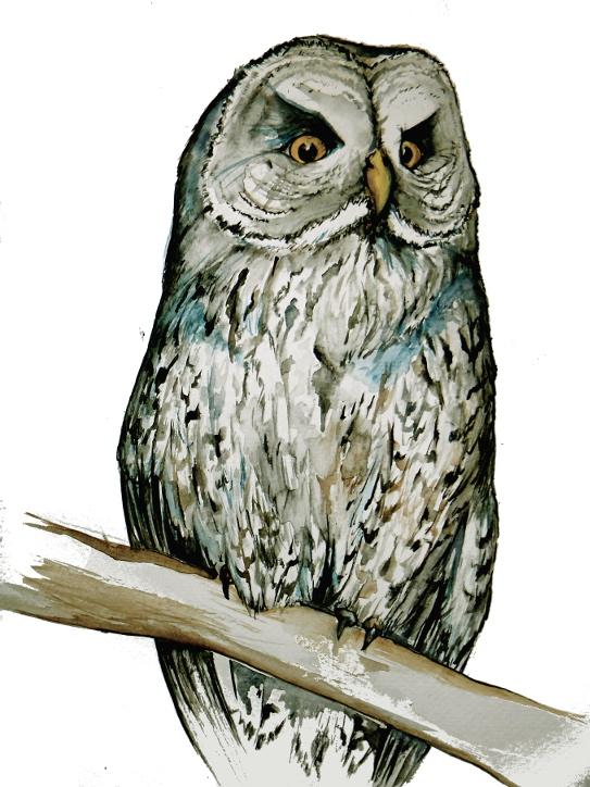 Great Gray Owl - Watercolor