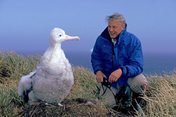 David Attenborough actively attenboroughing
