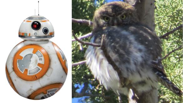 BB8+Owl